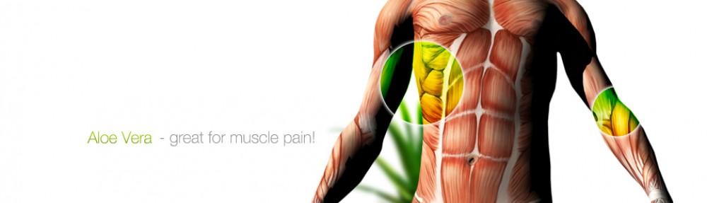 Aloe vera and the human digestive system | Aloevera da Madeira